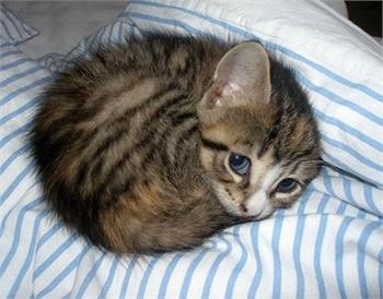 Free Kittens - Sample