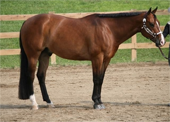 A Great Horse - Sample Listing
