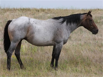 Beautiful Palamino Horse-Sample Listing