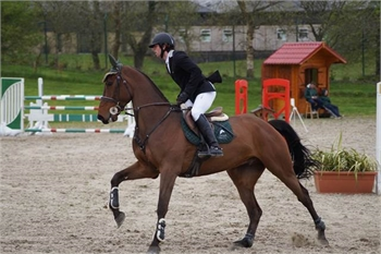 Nice Horse for sale-Sample Listing